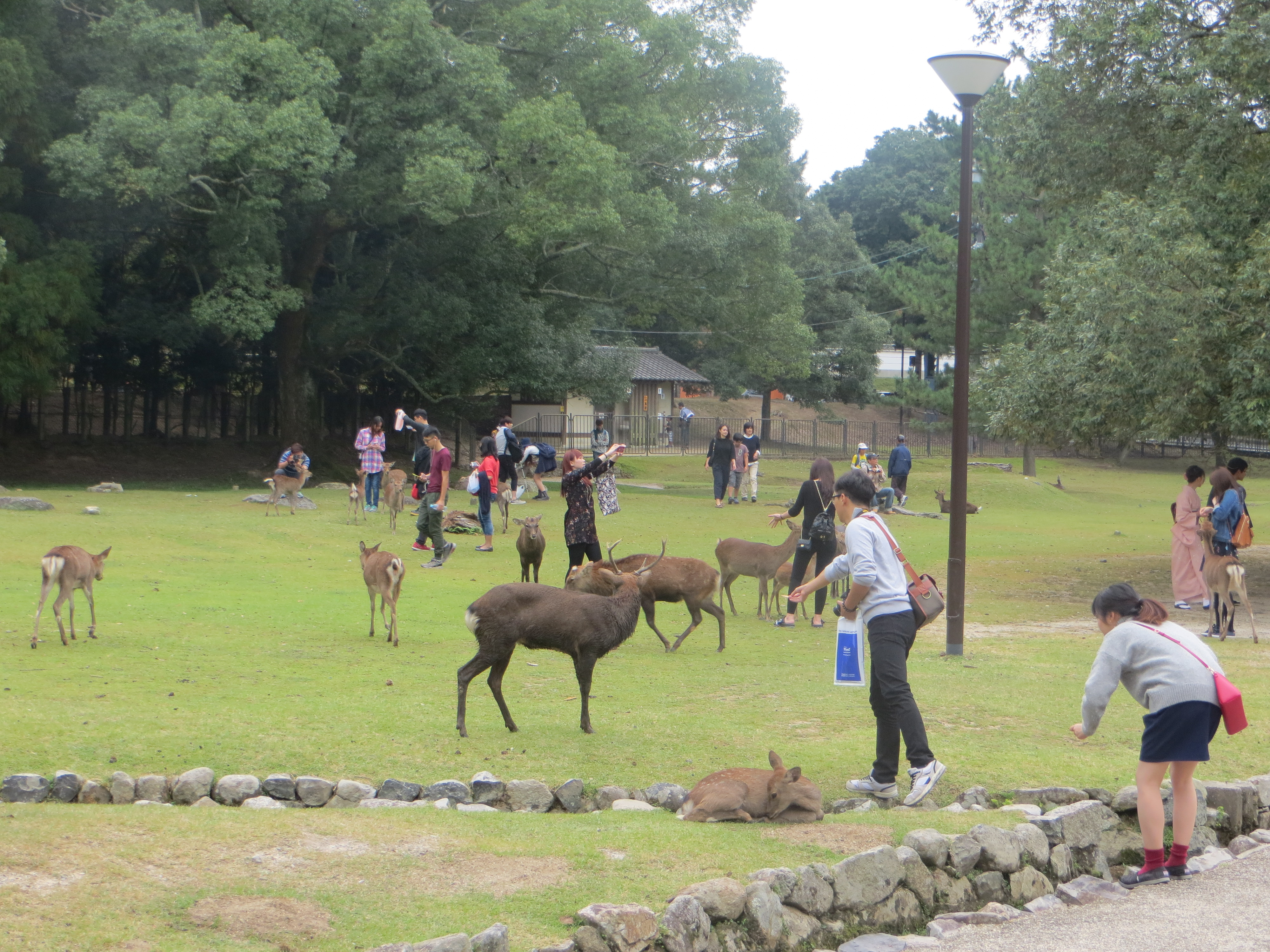 how to travel from tokyo to nara park
