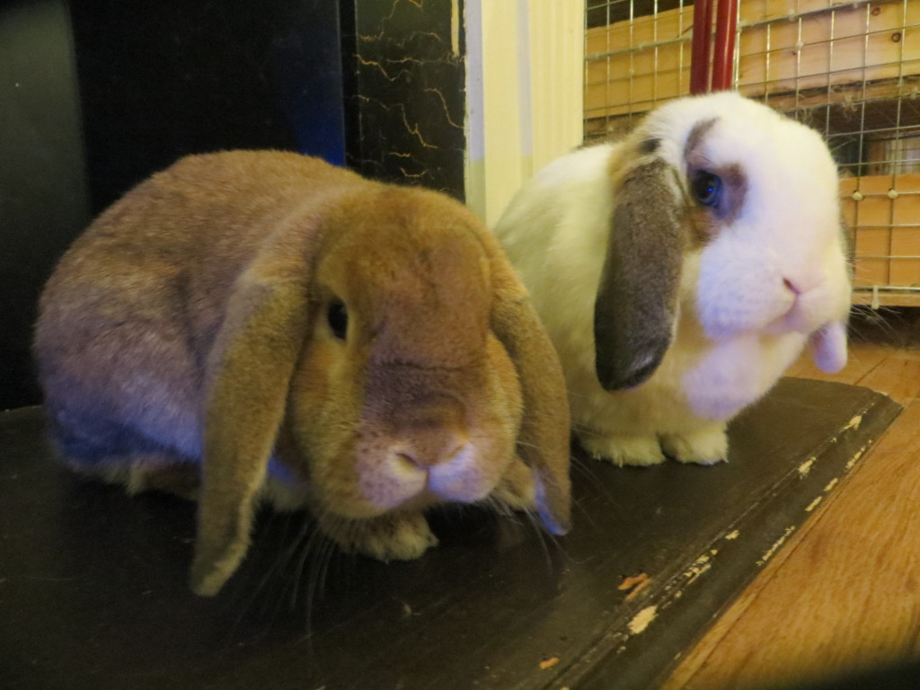 Unrelated picture of rabbits